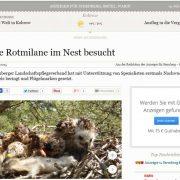 Erste Rotmilane im Nest besucht