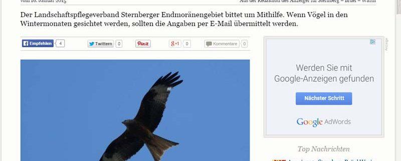 Sternberger Anzeiger: Rotmilan im Seenland gesucht