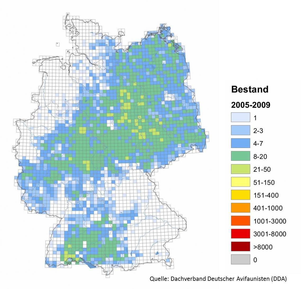Der Brutbestand in Deutschland. Blau bedeutet eine niedrige Dichte des Brutbestandes, Rot eine hohe Dichte. Die Daten wurden im Rahmen der Erstellung des Deutschen Brutvogelatlas -ADEBAR - erhoben.