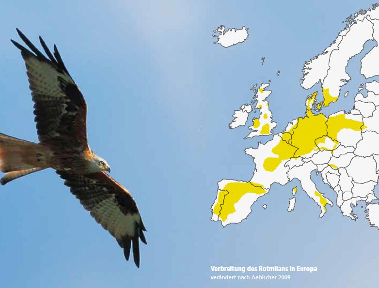 Rotmilan-Verbreitung in Europa