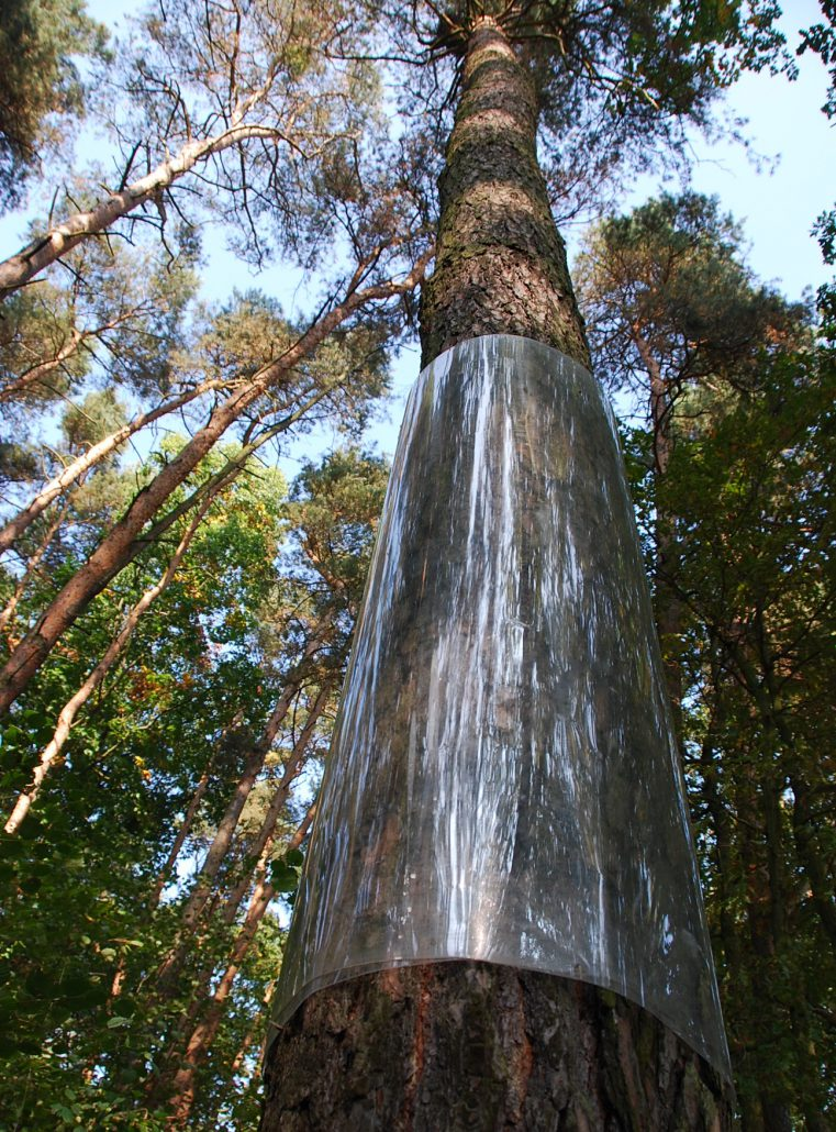 Baummanschette von unten © Madlen Schimkat